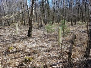 Geschütze Baumpflanzungen